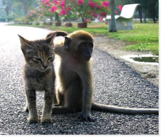 [Funny Animals] Traveling Companion - Cat & Monkey; Image ONLY