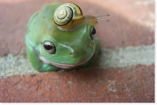 [Funny Animals] Traveling Companion - Frog & Snail; Image ONLY