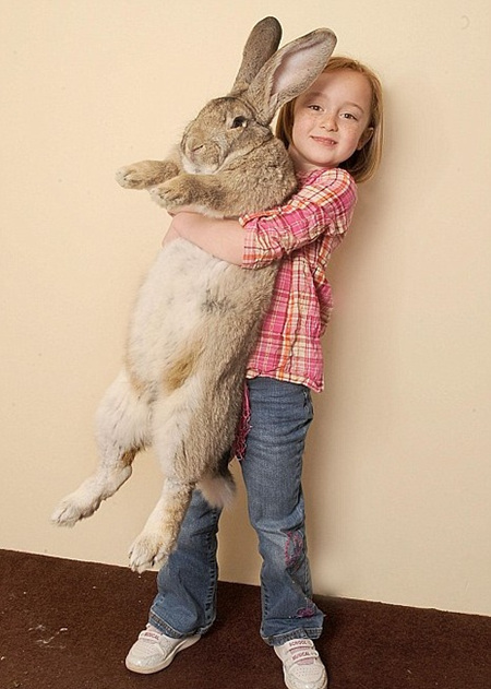 World's biggest rabbit weighs three-and-a-half stone [Telegraph 2010-04-04]; Image ONLY