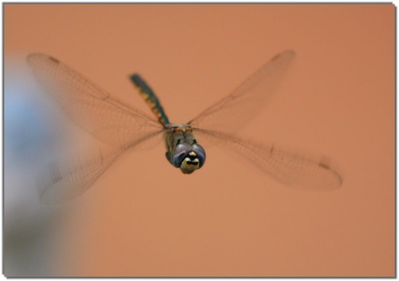 dragonfly 2; DISPLAY FULL IMAGE.