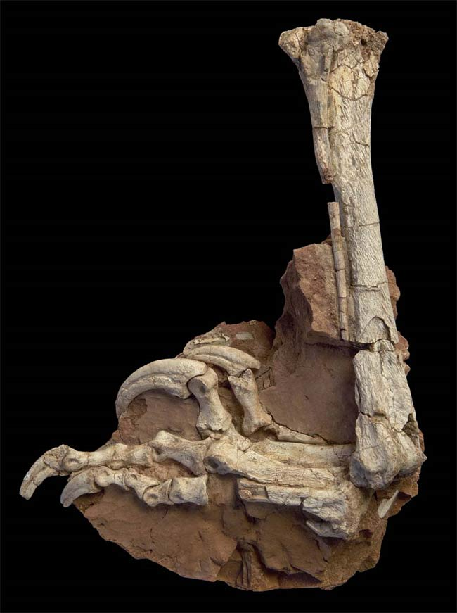 Velociraptor Had a Kickboxing Cousin [LiveScience 2010-08-30]; Image ONLY