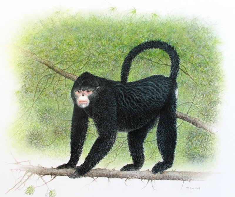 New Snub-Nosed Monkey Discovered in Northern Myanmar [AlphaGalileo 2010-10-25]; DISPLAY FULL IMAGE.