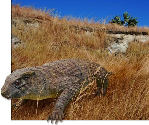Ancient vegetarian crocodile fossil unearthed [USA-TODAY 2010-12-14]; Image ONLY