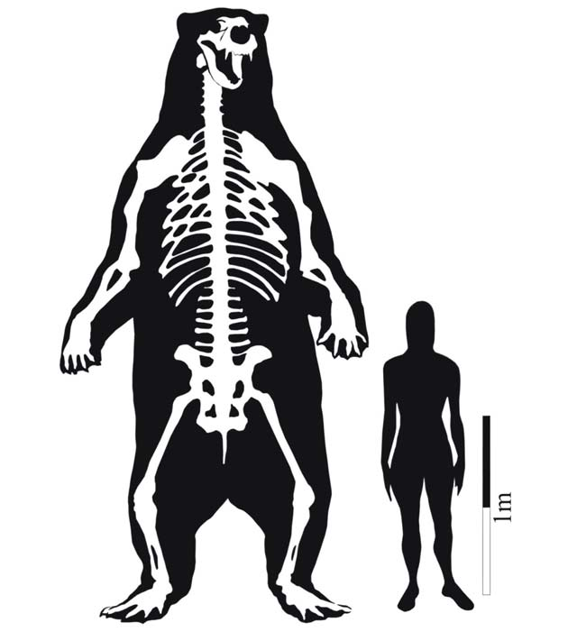 Standing at 11 Feet: World's Largest Known Bear Unearthed [LiveScience 2011-02-01]; Image ONLY