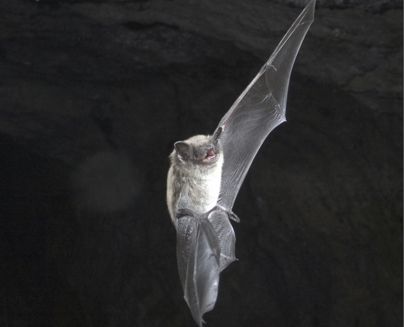 What Are Bats' Favorite Foods? The Truth Lies in the Poop [LiveScience 2011-03-03]; DISPLAY FULL IMAGE.