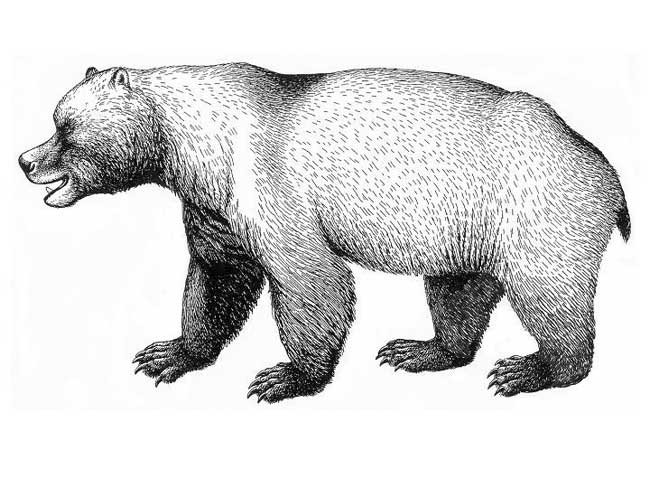 25 Amazing Ancient Beasts - European Cave Bear [LiveScience 2011-04-12]; Image ONLY