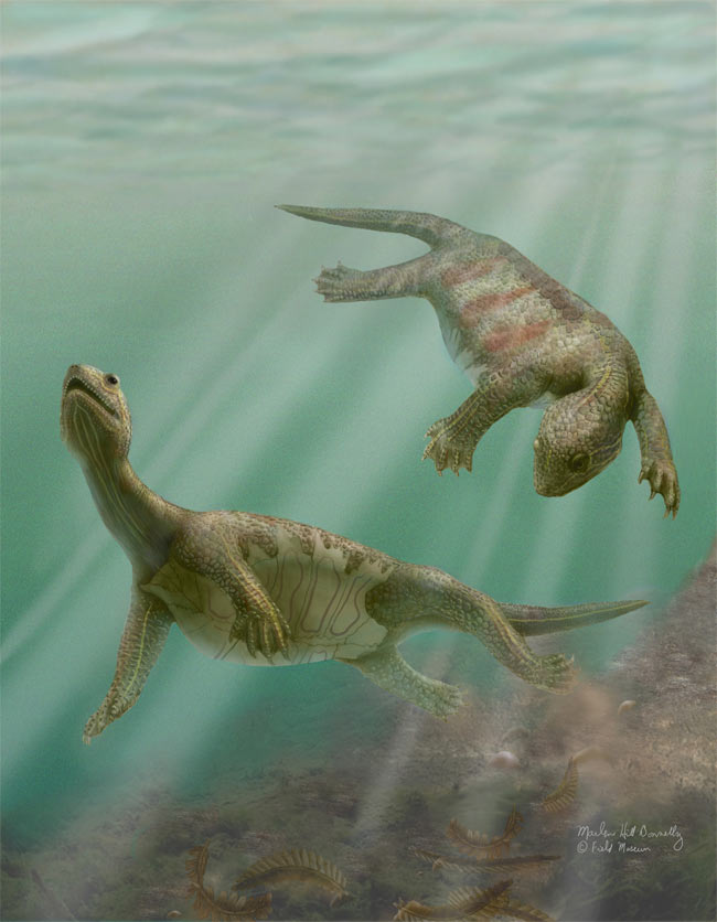 25 Amazing Ancient Beasts - Aquatic Turtle (Odontochelys semitestacea) [LiveScience 2011-04-12]; Image ONLY