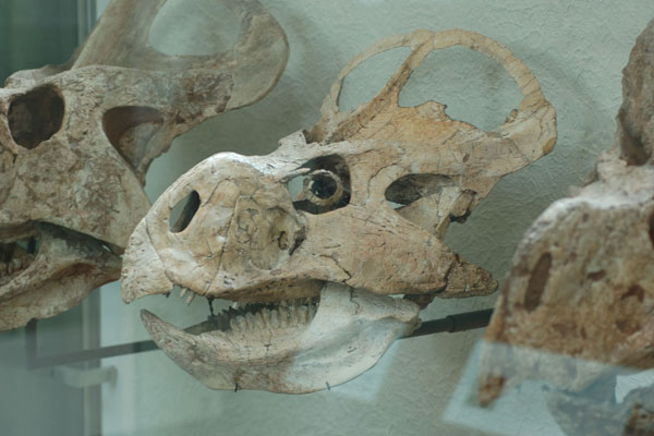 Scary Thought: Dinosaurs May Have Hunted at Night [LiveScience 2011-04-14]; Image ONLY