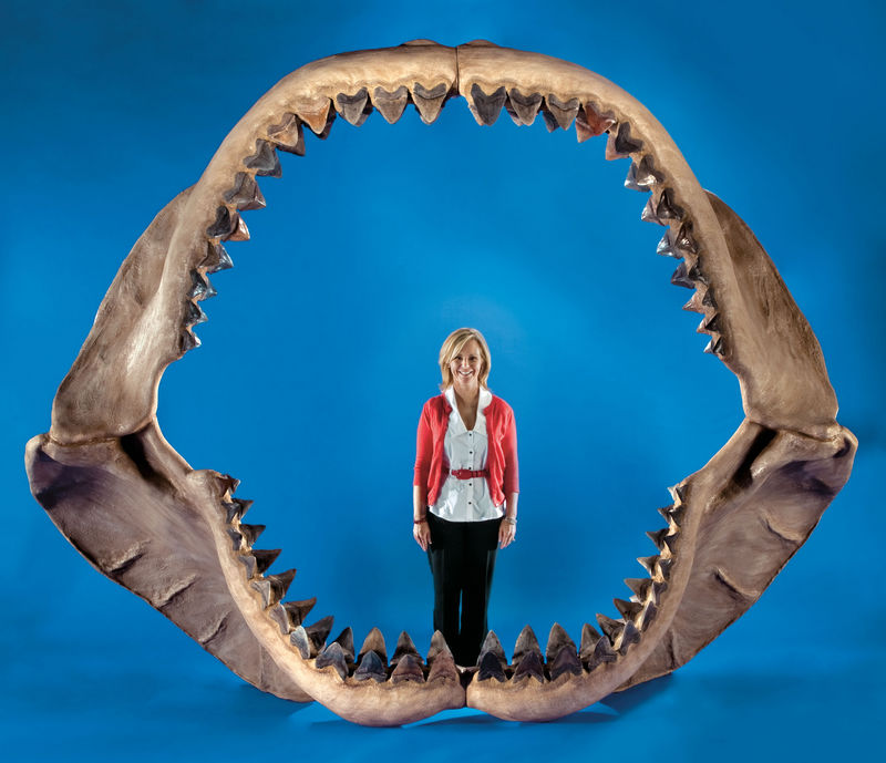 For Sale: World's Largest Shark Jaws [LiveScience 2011-05-20]; DISPLAY FULL IMAGE.