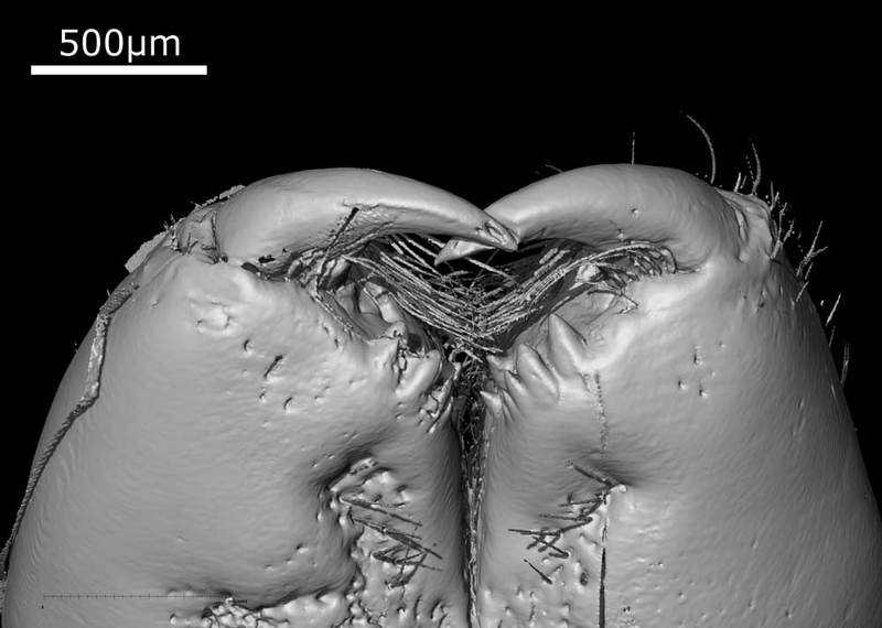 Face of 49-Million-Year-Old Spider Revealed in 3-D [LiveScience 2011-05-20]; DISPLAY FULL IMAGE.