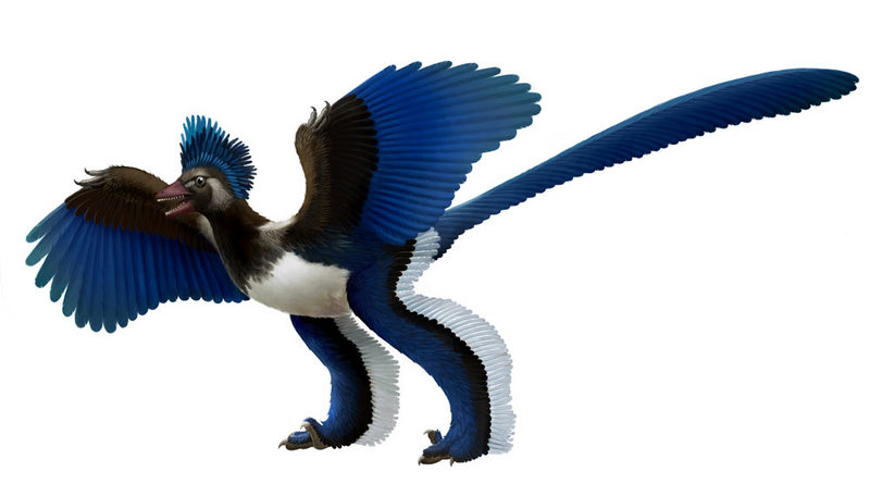 Flap Flop: Earth's First Bird Not a Bird After All [LiveScience 2011-07-27]; DISPLAY FULL IMAGE.