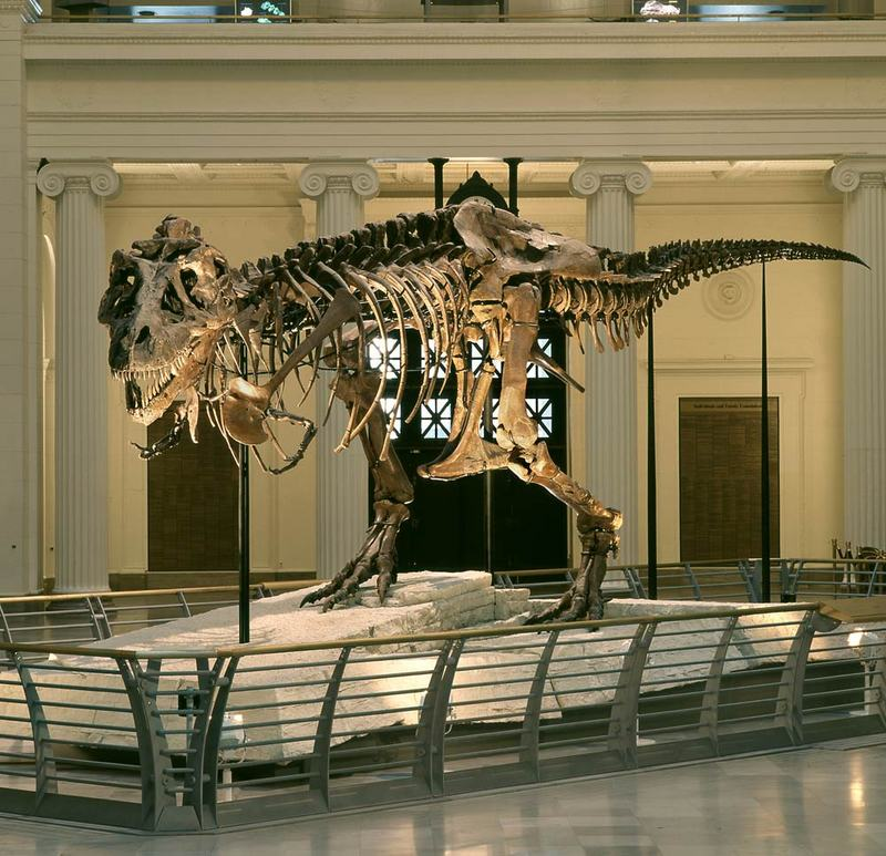 Image Gallery: The Life of T. Rex [LiveScience 2011-10-12]; DISPLAY FULL IMAGE.