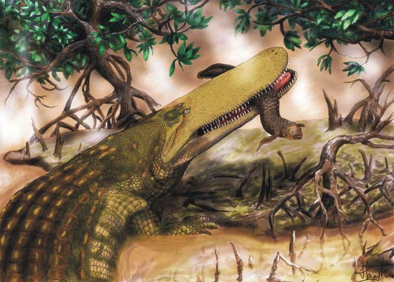 Ancient Monster Croc Sported Shield on Skull [LiveScience 2011-11-06]; DISPLAY FULL IMAGE.