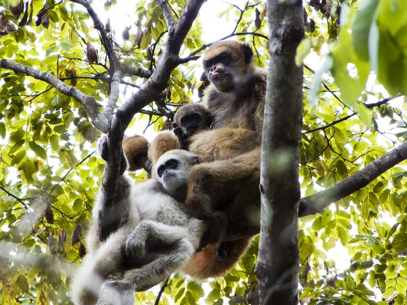 Monkey Moms Help Sons Get Babes [LiveScience 2011-11-08]; DISPLAY FULL IMAGE.