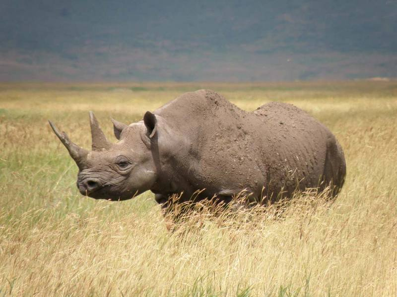 25% of Mammals at Risk of Extinction, IUCN Reports [LiveScience 2011-11-10]; DISPLAY FULL IMAGE.