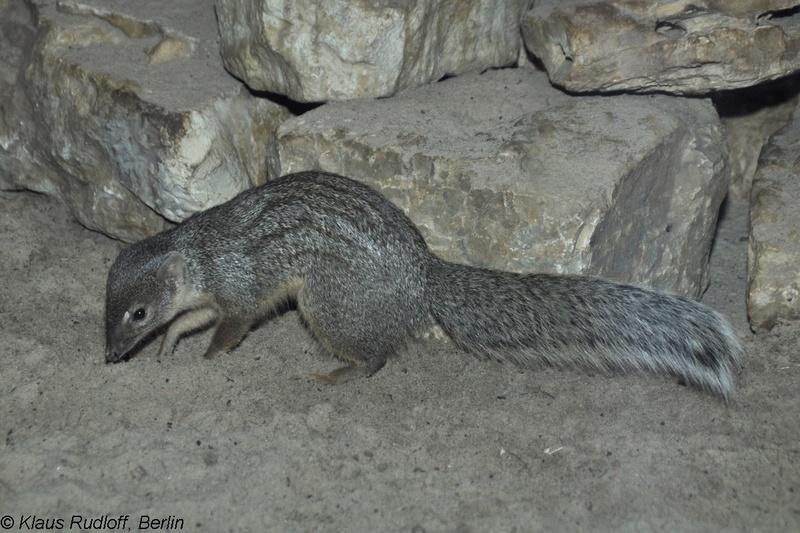 Fauna impressionante de Madagascar. 1321440017-m
