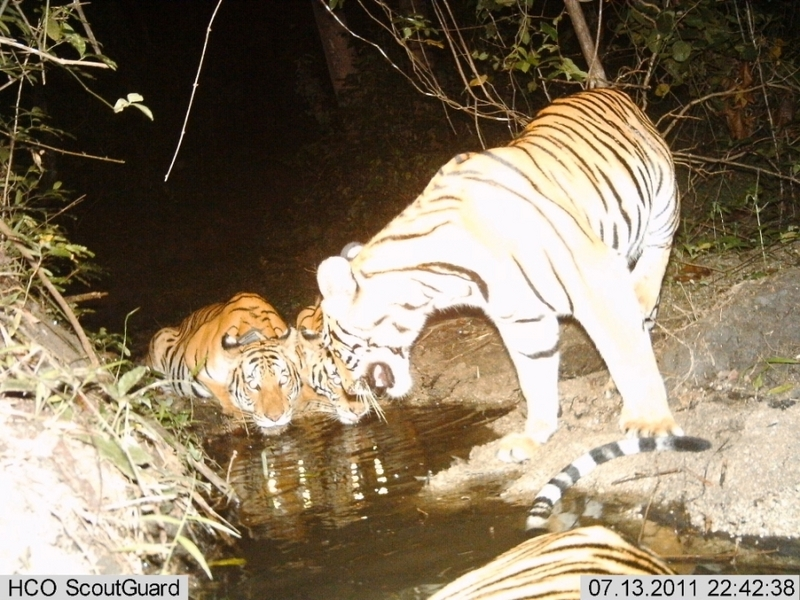 Rare Wildlife Caught By Camera Traps in Thailand [LiveScience 2011-12-20]; DISPLAY FULL IMAGE.