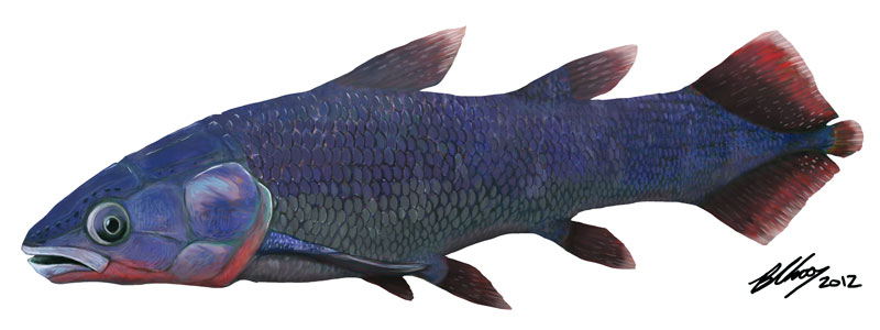 Skull Confirms Older Origin for 'Living Fossil' Fish [LiveScience 2012-04-10]; Image ONLY
