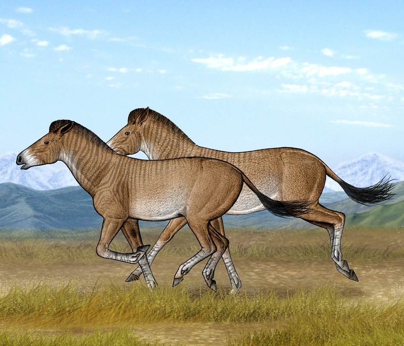 Ancient Horse Bones Tell Story of Tibetan Plateau [LiveScience 2012-04-23]; DISPLAY FULL IMAGE.