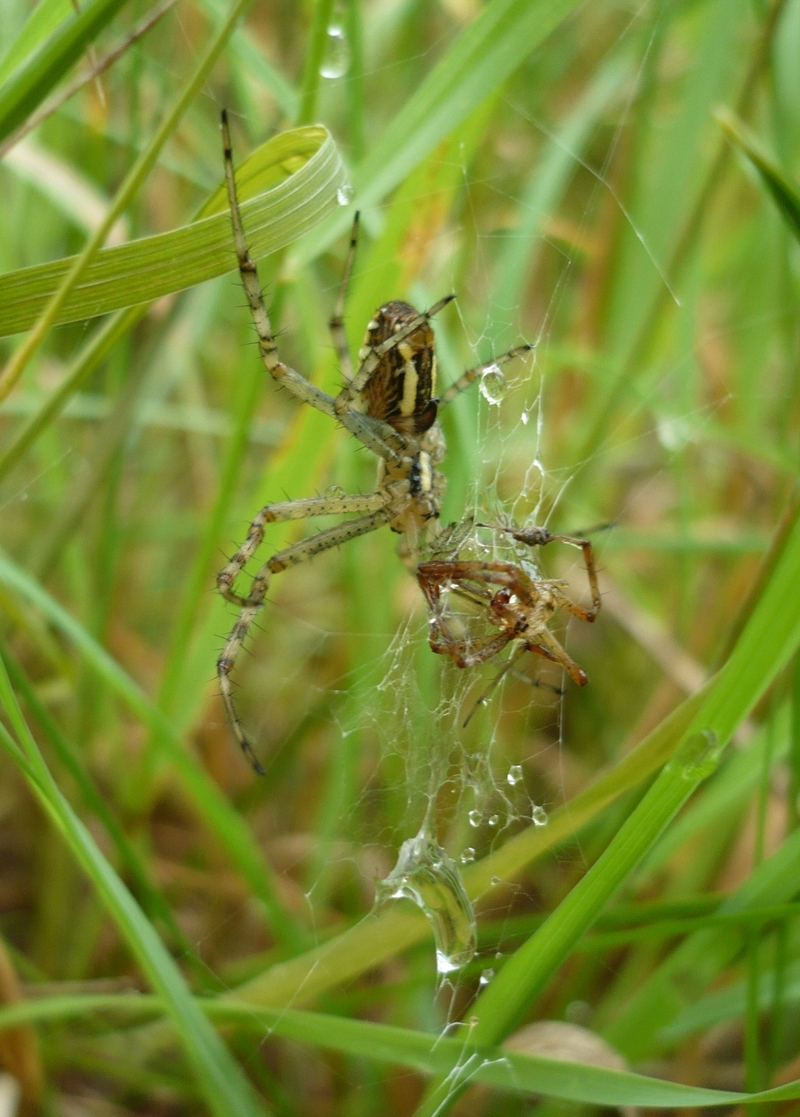 For Males Dying to Mate, Only Certain Females Will Do [LiveScience 2012-04-25]; DISPLAY FULL IMAGE.