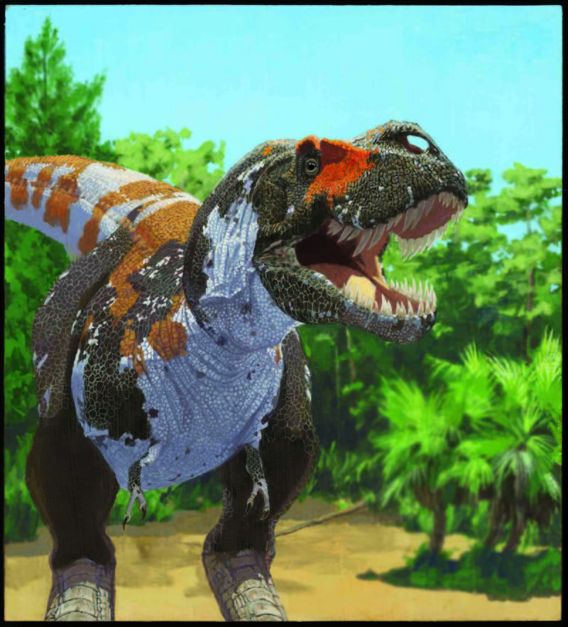 Some Dinosaurs Were Dealt a Slow Death [LiveScience 2012-05-01]; DISPLAY FULL IMAGE.