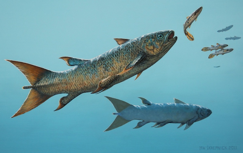 Ancient 'Rebel' Fish Had Shark-Like Personality [LiveScience 2012-05-02]; DISPLAY FULL IMAGE.