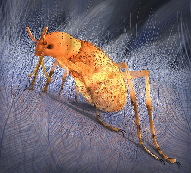 Monster 'Fleas' Put the Bite on Dinosaurs [LiveScience 2012-05-02]; Image ONLY