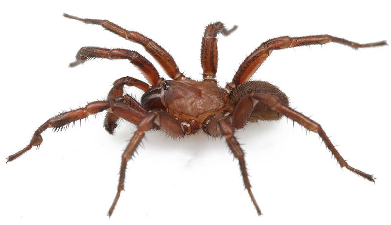 New Spider Species Discovered in Alabama Housing Subdivision [LiveScience 2012-05-08]; DISPLAY FULL IMAGE.