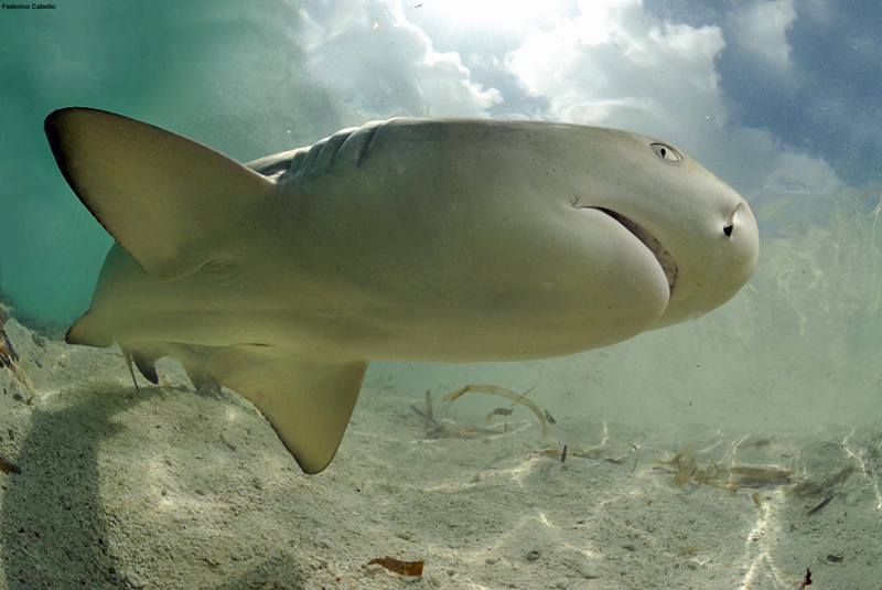 Venezuela Bans Shark Finning, Establishes Shark Sanctuary [LiveScience 2012-06-22]; DISPLAY FULL IMAGE.