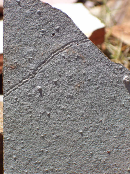 Tiny Tracks of First Complex Animal Life Discovered [LiveScience 2012-06-28]; Image ONLY