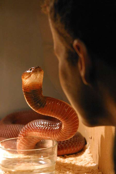 5 Killer Creatures: Surprisingly Deadly Animals [LiveScience 2012-07-10]; Image ONLY