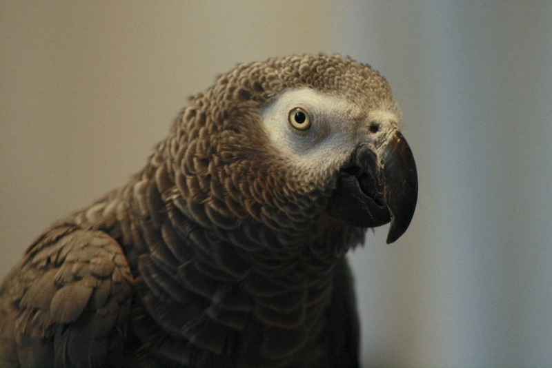 Parrots Can Reason Like 3-Year-Old Kids [LiveScience 2012-08-07]; DISPLAY FULL IMAGE.
