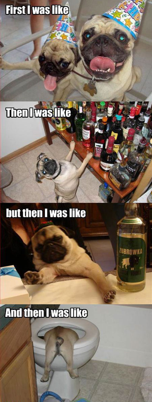 pug-partied-too-hard.jpg