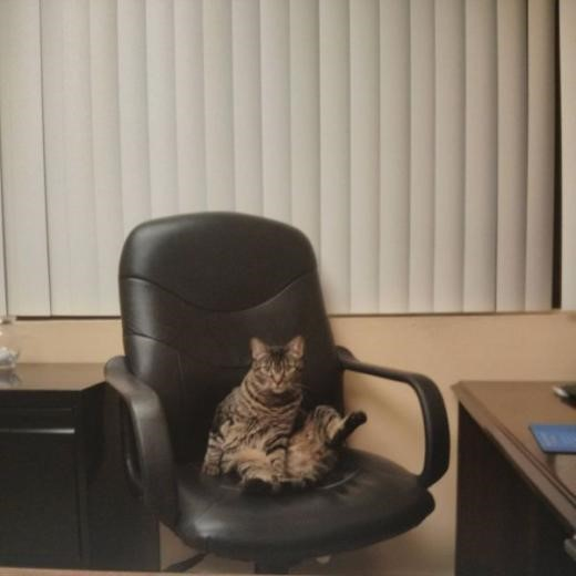 cat the chairman; Image ONLY