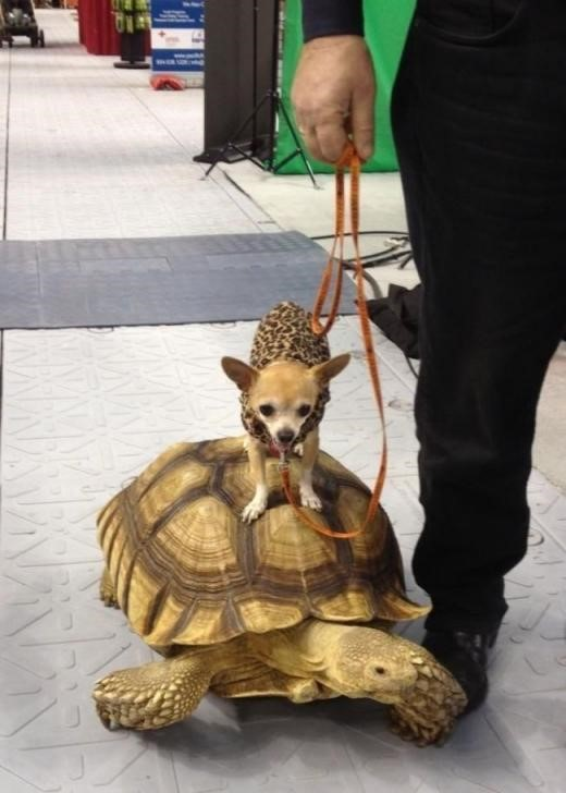 dog the turtle-rider.jpg