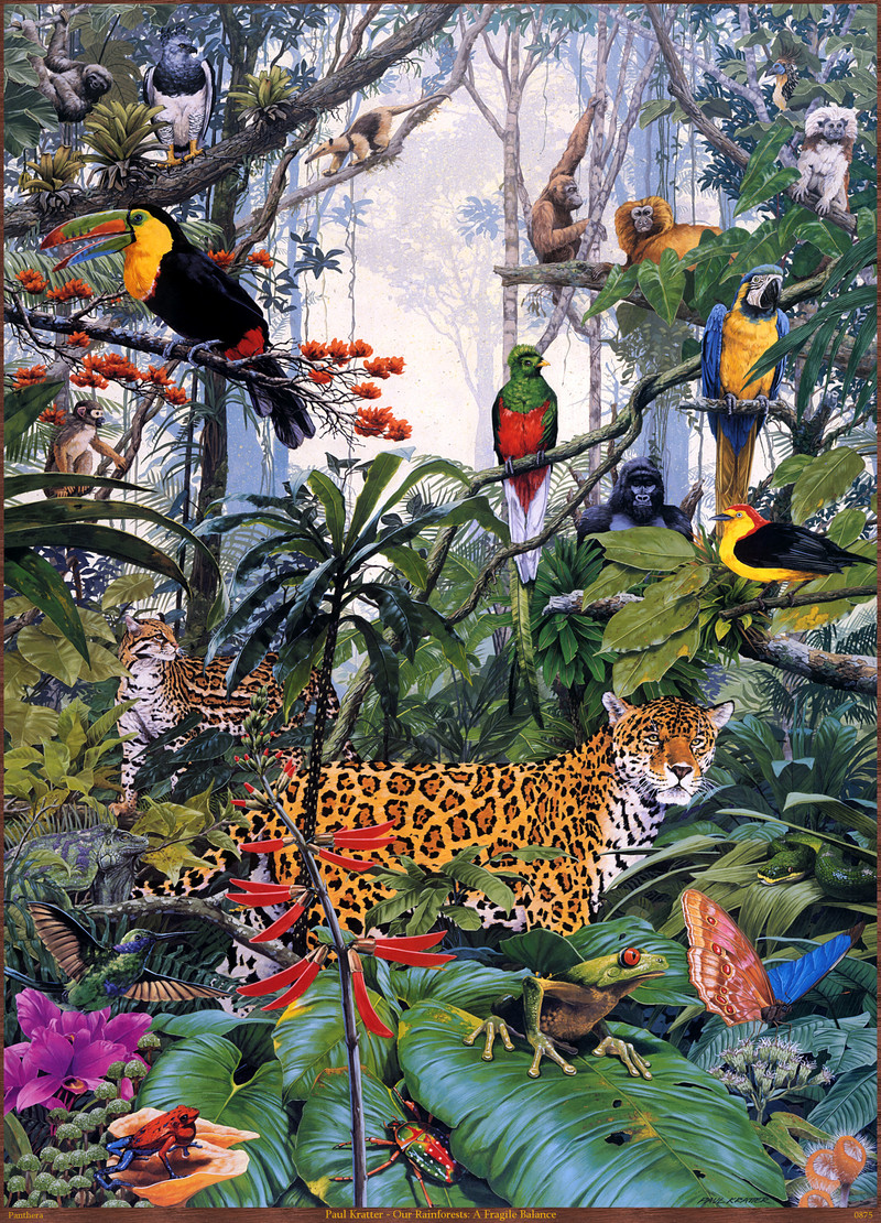 Panthera_0875_Paul_Kratter_Our_Rainforests_A_Fragile_Balance; DISPLAY FULL IMAGE.