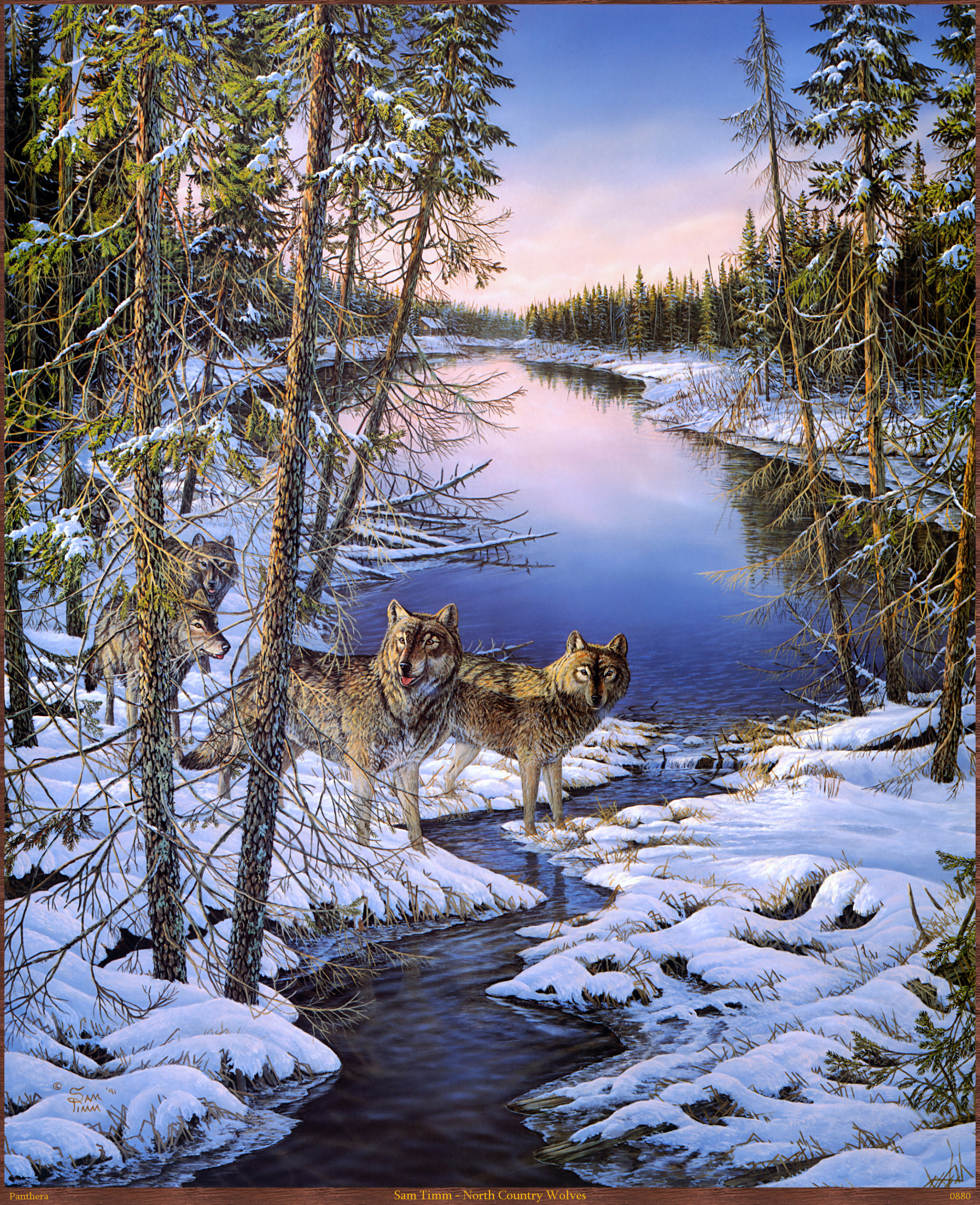 Panthera_0880_Sam_Timm_North_Country_Wolves; Image ONLY