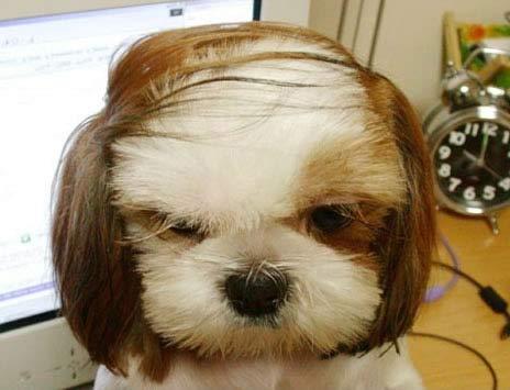 funny-dogs-2.jpg