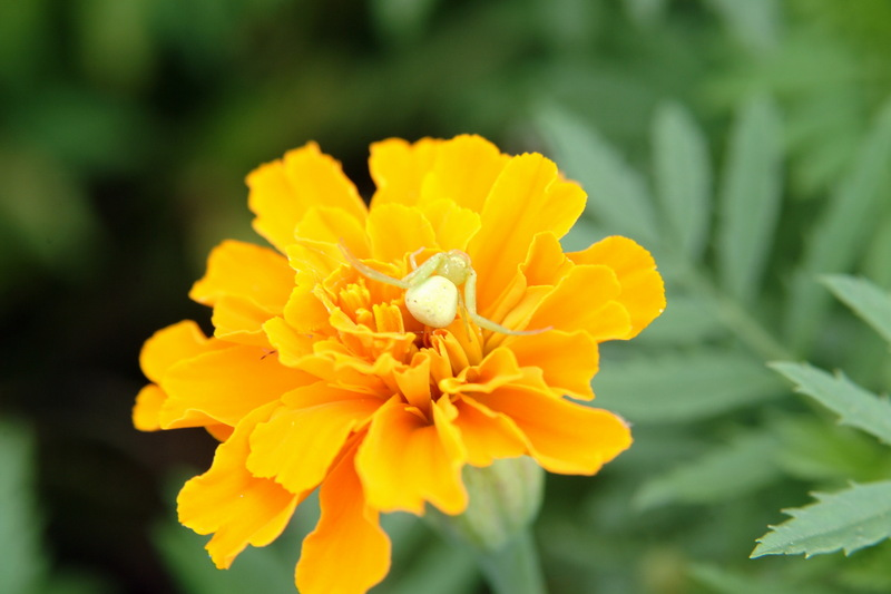 flower bed embellishes