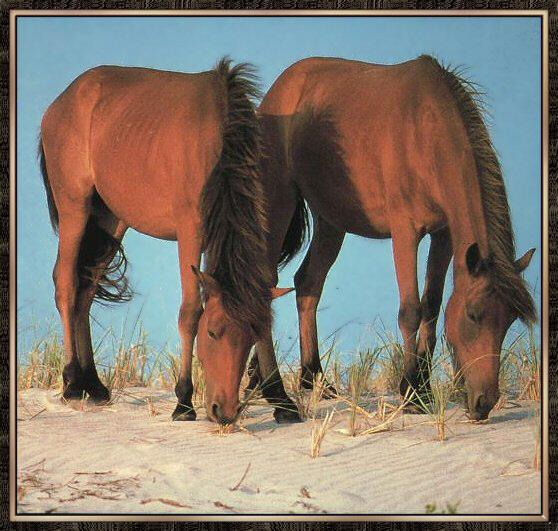 Domestic Horses (Equus caballus) <!--말--> - Solid Coated Mustangs; Image ONLY