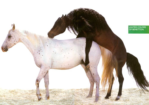 Domestic Horses (Equus caballus) <!--말--> mating - Ad ' United Colors of Benetton'; Image ONLY