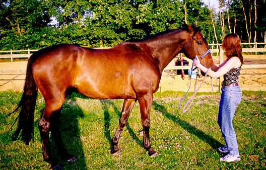 Domestic Horse (Equus caballus) <!--말-->; Image ONLY