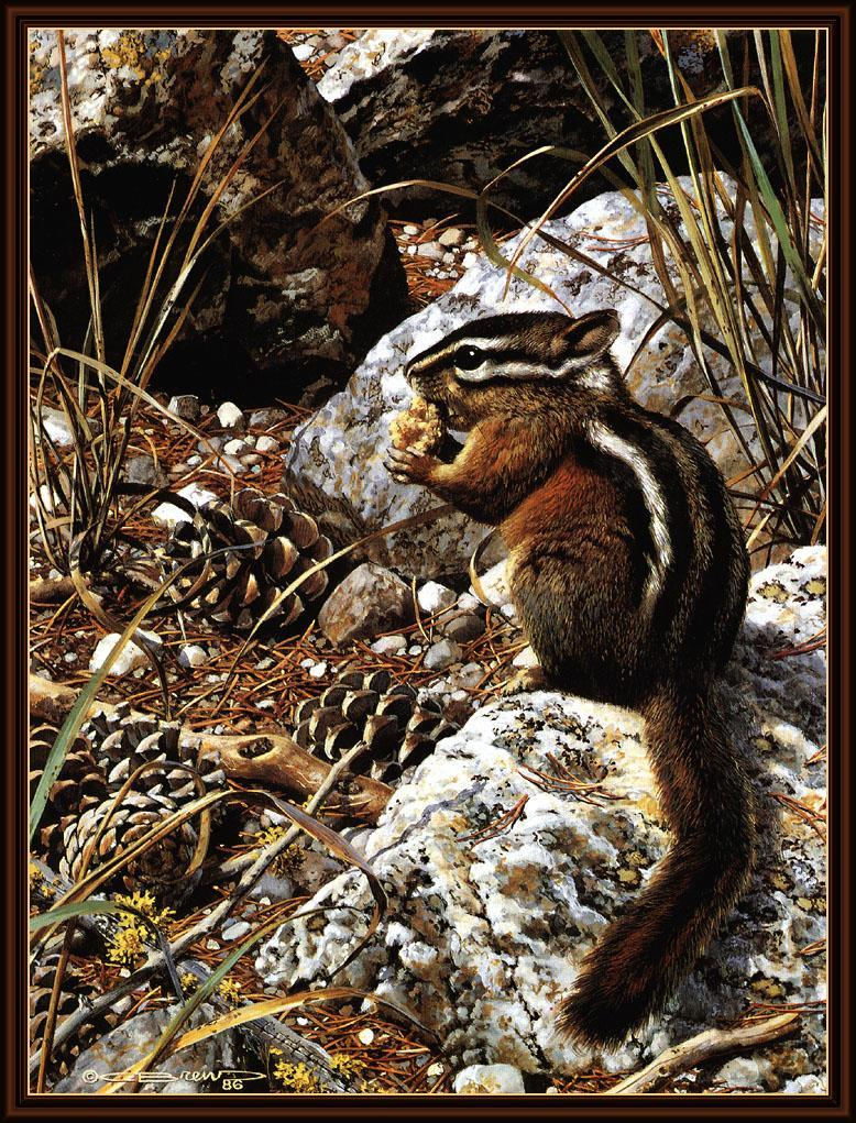 [Animal Art - Carl Brenders]  Harvest Time - Chipmunk; Image ONLY