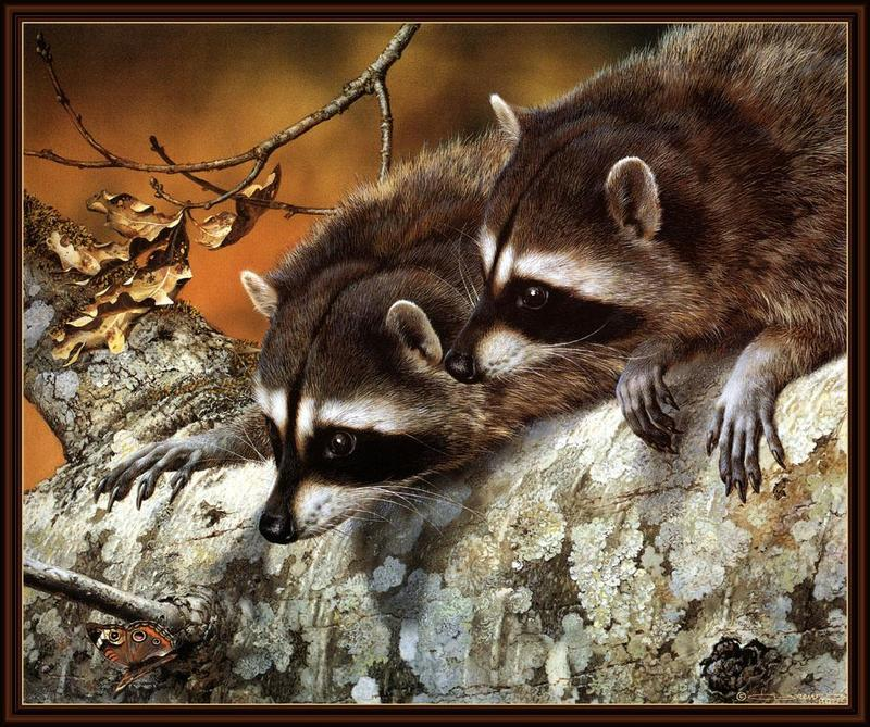 [Animal Art - Carl Brenders] Wild Northern Raccoons (Procyon lotor) <!--아메리카너구리-->; DISPLAY FULL IMAGE.