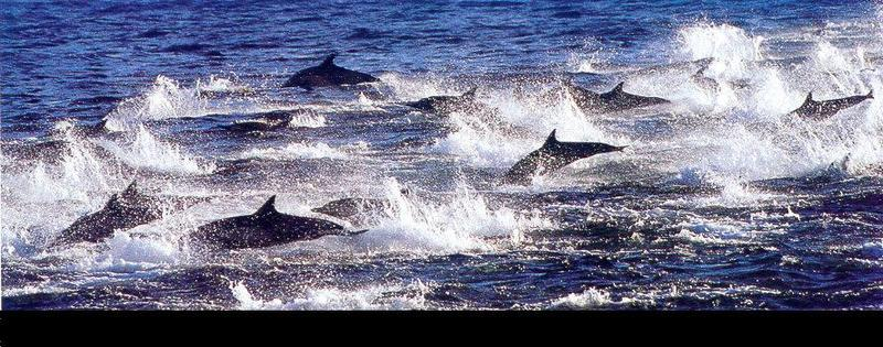 [Joe McDonald] Dolphins <!--돌고래-->; DISPLAY FULL IMAGE.