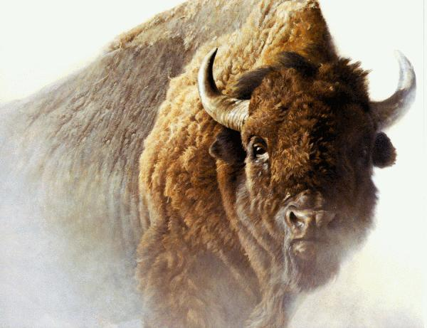 [Animal Art] American Bison (Bison bison) <!--아메리카들소-->; Image ONLY