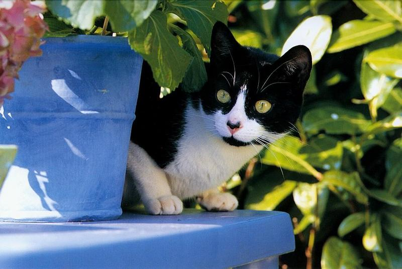 cat smell removal home remedies