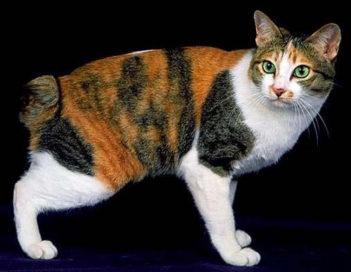 Calico Cat Korean Name