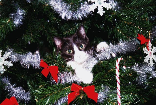 Christmas Feral Cat (Felis silvestris catus) <!--고양이-->; Image ONLY