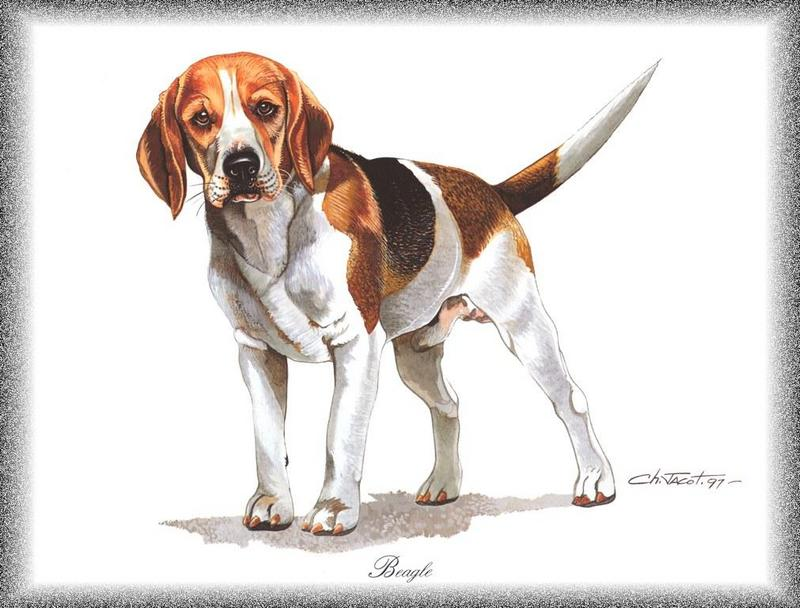 [Painting] Dog - Beagle (Canis lupus familiaris) <!--개, 비글-->; DISPLAY FULL IMAGE.